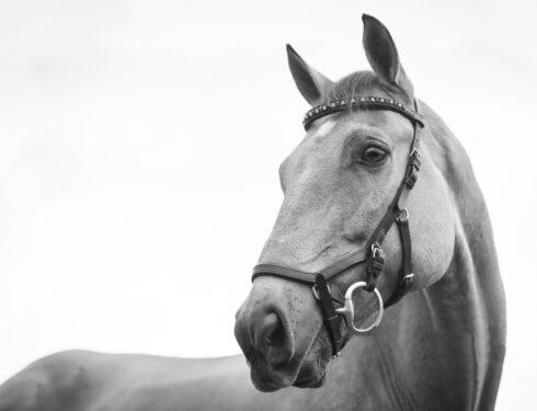 Hest, FOTO:Kirsten LaChance/Unsplash