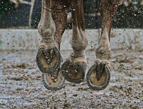 Leddbetennelser hos hest