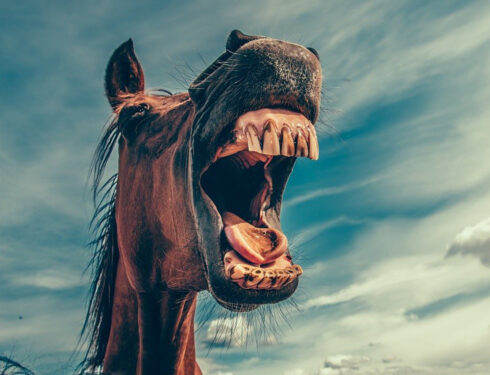 Tannhelse hos hest